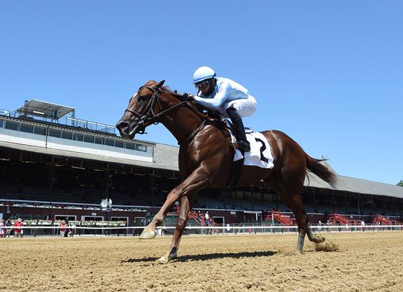 Distorted Humor colt a TDN 'Rising Star' at Saratoga title=
