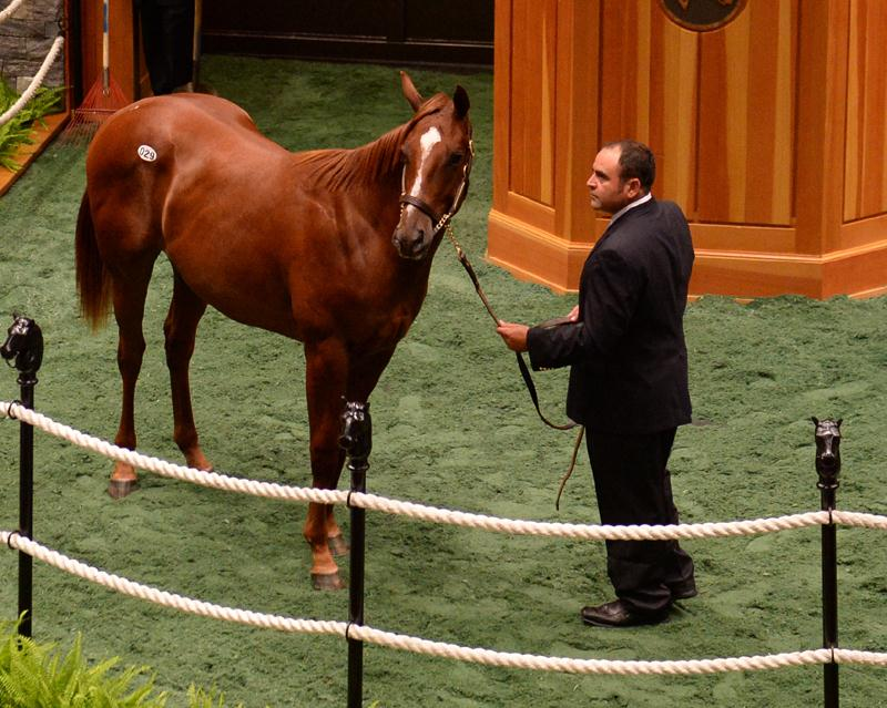 $550K for Distorted Humor yearling at Saratoga