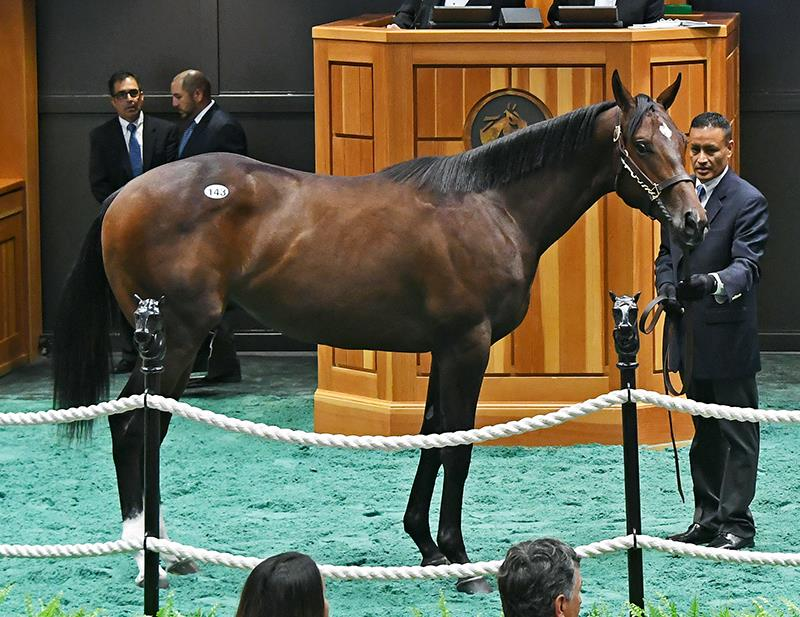Distorted Humor closes strong at F-T Saratoga Sale title=