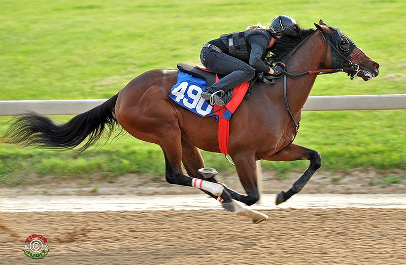 Distorted Humor colt brings $850,000 at Fasig-Tipton Midlantic title=