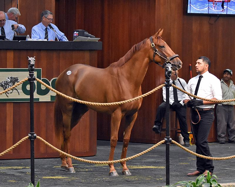 Distorted Humor filly tabbed for $575,000 Wednesday at OBS 2-year-old sale title=
