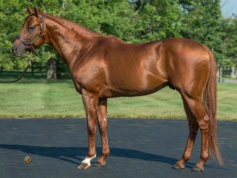 Drosselmeyer filly debuts a 6 ½-length winner title=