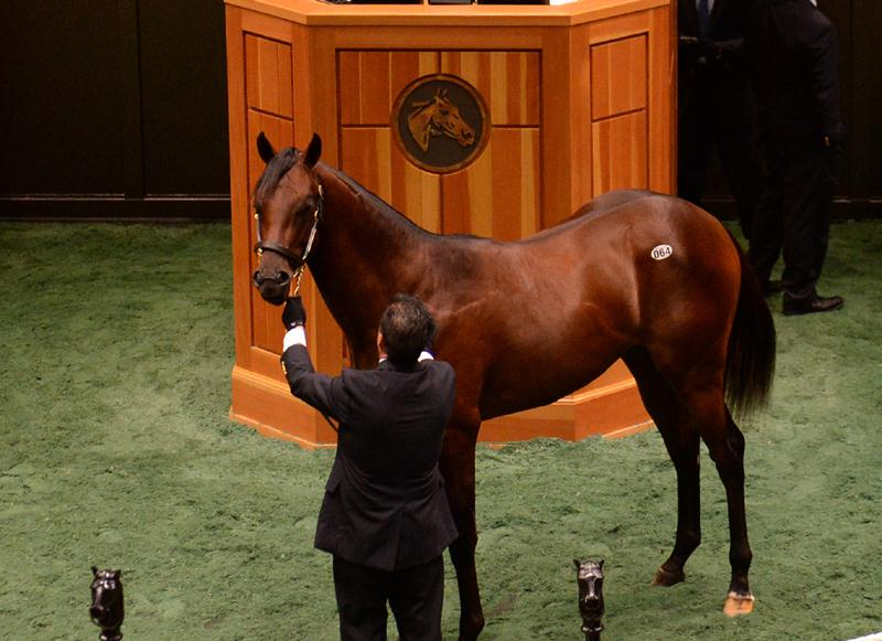 Drosselmeyer colt brings $300,000 at Fasig-Tipton Saratoga sale