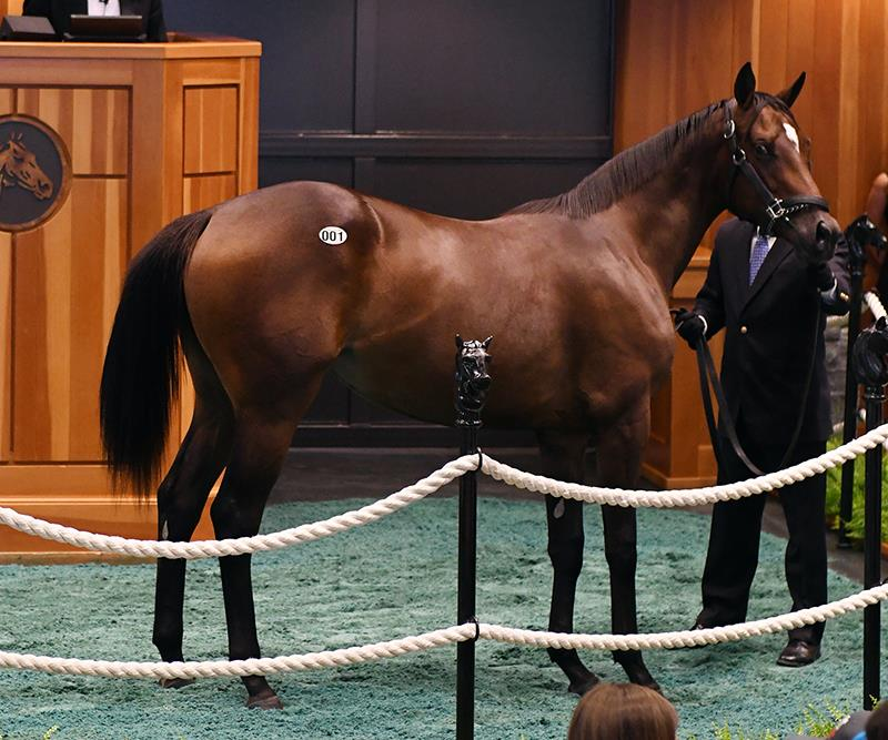 $275,000 Exaggerator filly kicks off Fasig-Tipton Saratoga Yearling sale title=