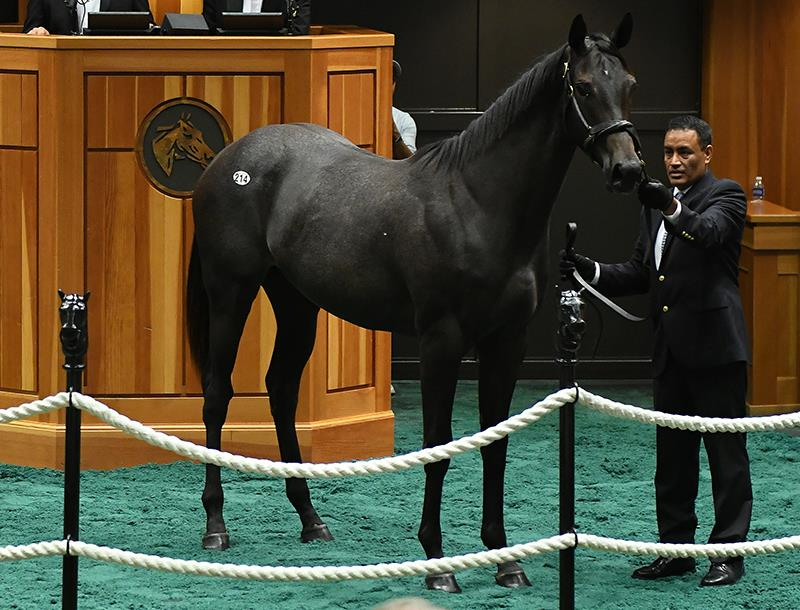 $400,000 filly tops terrific F-T Saratoga sale for Exaggerator title=