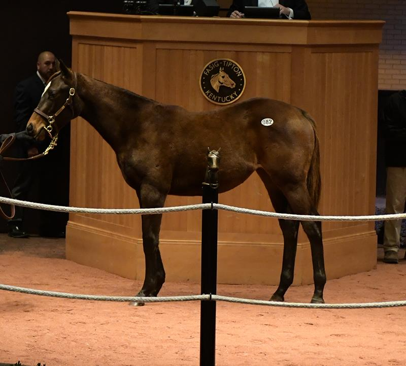 First Exaggerator weanling sells for $150,000 at Fasig-Tipton title=