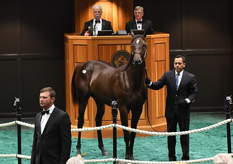$325,000 filly at Fasig-Tipton Saratoga sale for Fed Biz title=