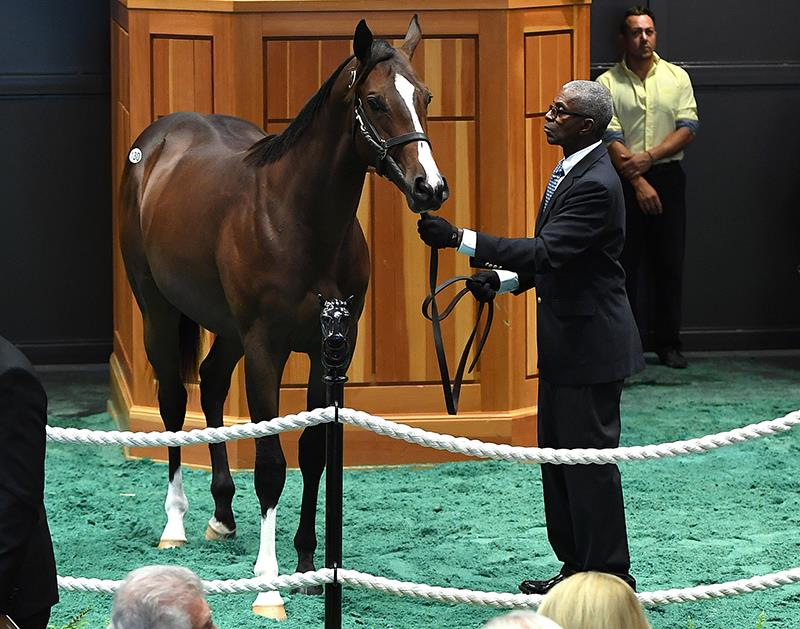 Fed Biz's $275,000 colt, hip No. 130, at the 2017 F-T Saratoga Yearling sale - photo by Z