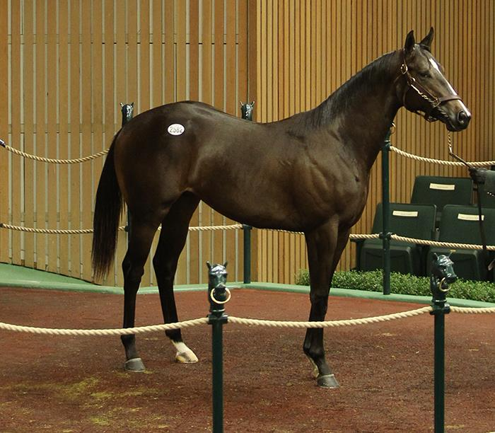 $175,000 colt the latest Fed Biz star at Keeneland sale title=