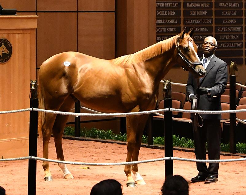 Fed Biz's $170,000 colt, hip No. 291, at the Fasig-Tipton July 2017 Yearling Sale - photo by Z