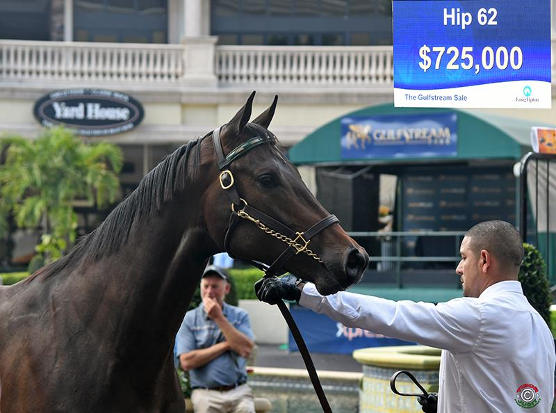 F-T Gulfstream sale features $725,000 Fed Biz colt title=