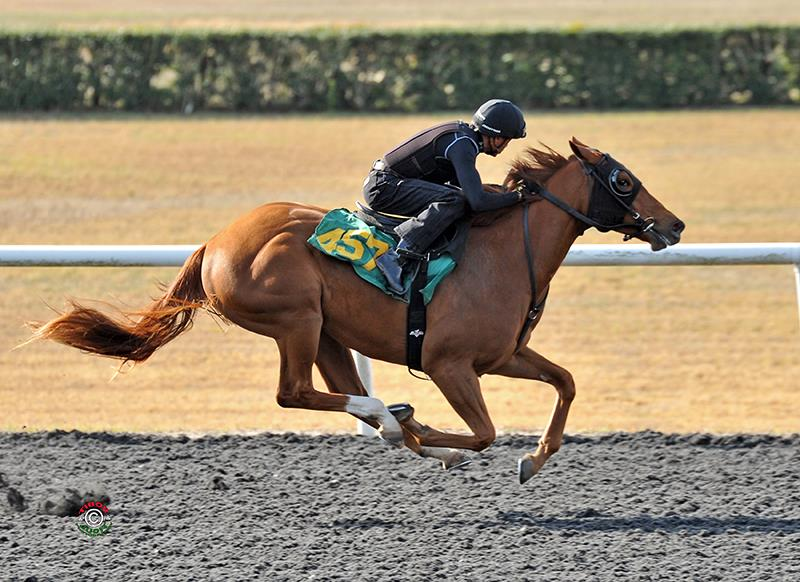 Fed Biz's $335,000 filly, hip No. 457, breezing at the 2018 OBS March 2-year-old Sale - Tibor Szlavik photo