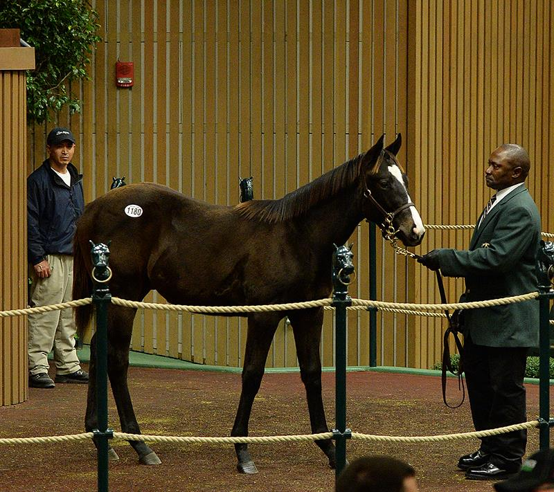 Fed Biz colt snagged for $230,000 at KEENOV title=