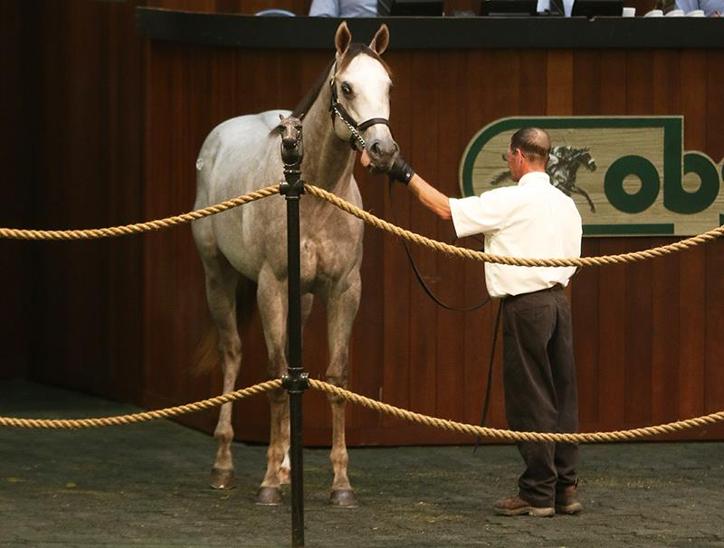 Gemologist: OBS Day 1 led by $300,000 colt title=