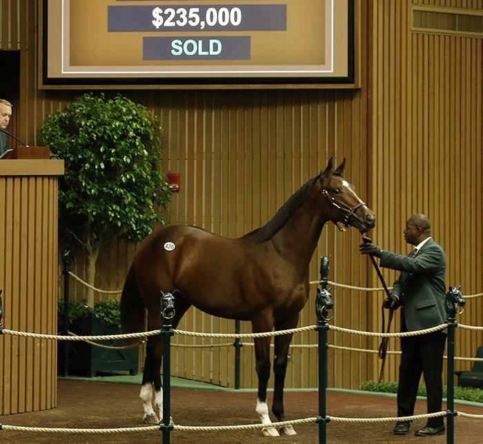 First Gemologist Keeneland yearling hammers for $235,000 title=