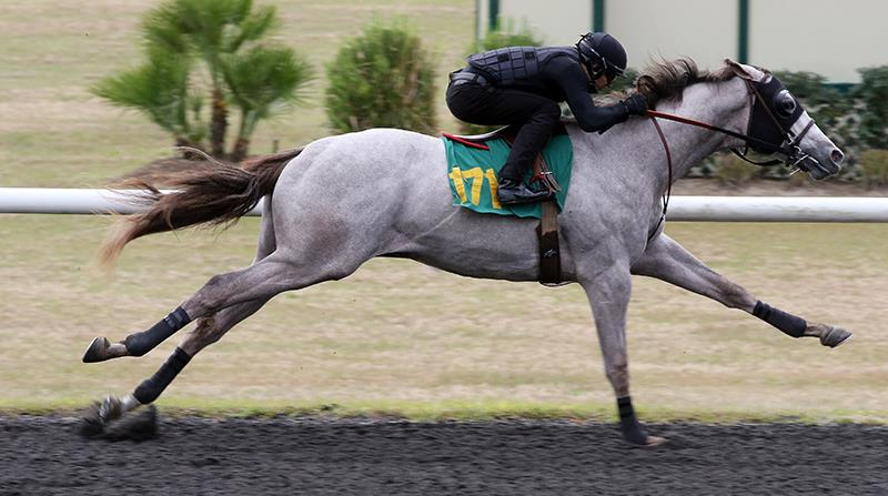 Gemologist colt has co-fastest breeze at OBS show title=