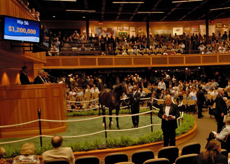 WinStar-bred colt is Saratoga Sale Topper title=