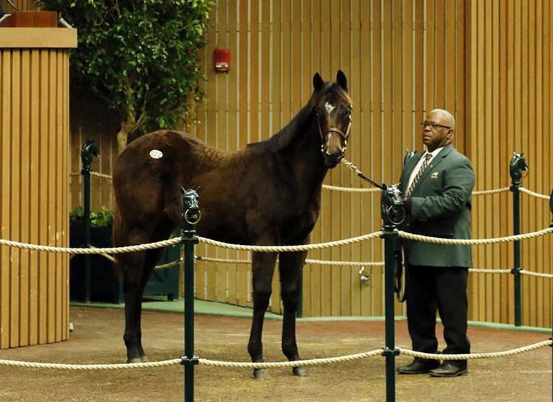 First Paynter yearling brings six figures at Keeneland title=