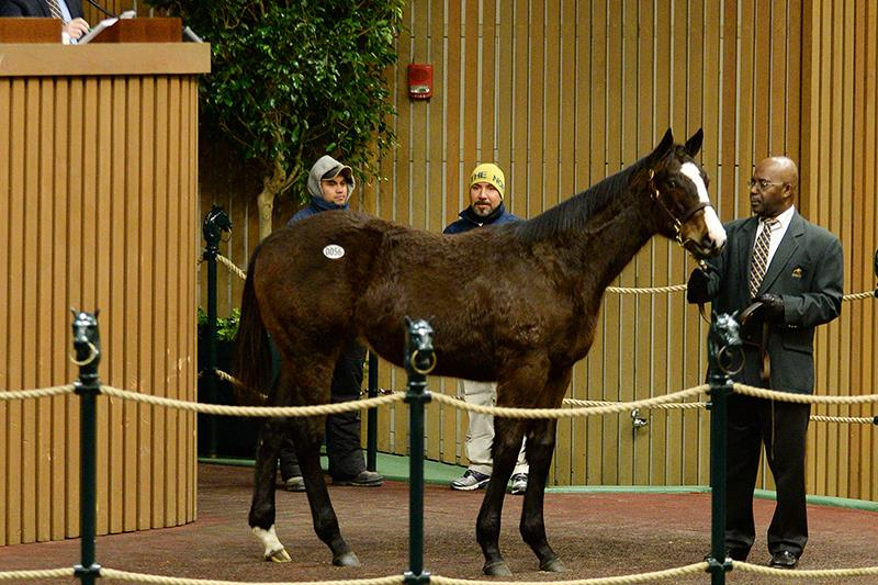 Pioneerof the Nile colt hammers for $195K at Kee Jan Day 1 title=