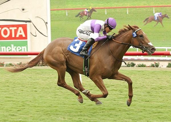 Bellamy Road filly Land Over Sea takes to Del Mar turf title=