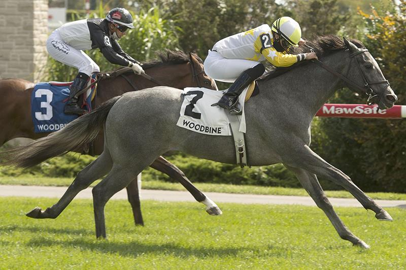 Credit River tops big Saturday at Woodbine for More Than Ready title=