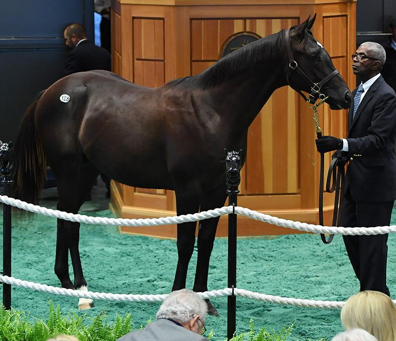More Than Ready yearlings average $318,333 at F-T Saratoga Sale title=