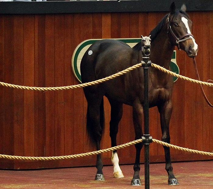 More Than Ready filly sells for $625,000 at OBS 2-year-old sale title=