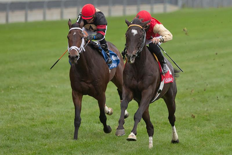 More Than Ready's Say the Word uncorks big rally to win Northern Dancer Turf (G1) title=