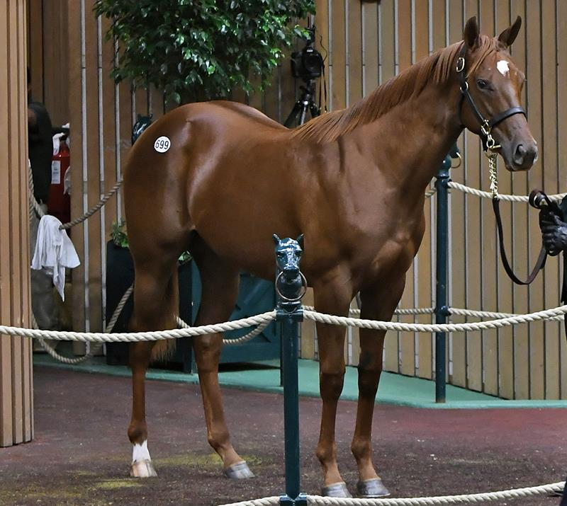 Big Wednesday at Keeneland sale for More Than Ready title=