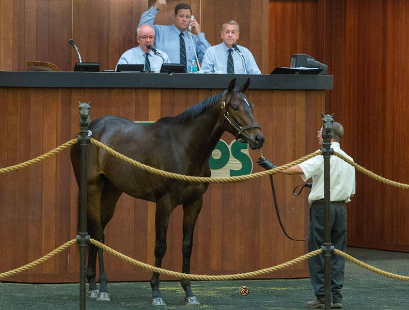 $375K Colonel John filly on closing day at OBS April Sale title=