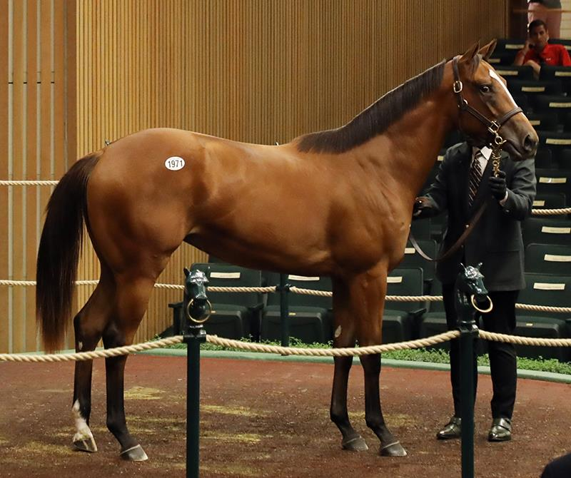 Outwork filly realizes $270,000 Monday at Keeneland Yearling sale title=