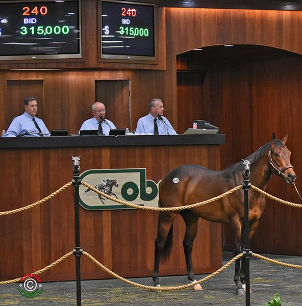 Overanalyze colt realizes $315,000 opening day of OBS April sale title=