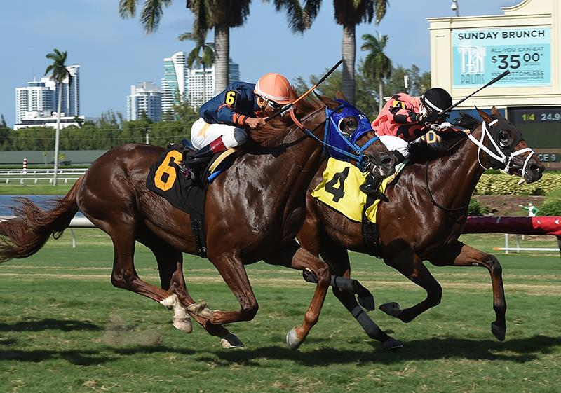 Renaisance Frolic (#4) bests Miago to claim victory at Gulfstream Park - Coglianese photo