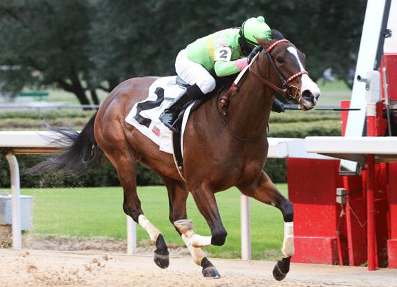 Paynter's undefeated Ring Leader sets record in Dixie Belle S. title=