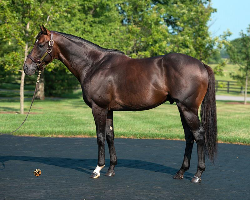 Keeneland buyers continue to aim high for Paynter yearlings title=