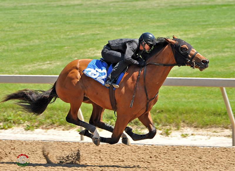 $270,000 Paynter colt Tuesday at Fasig-Tipton Midlantic title=