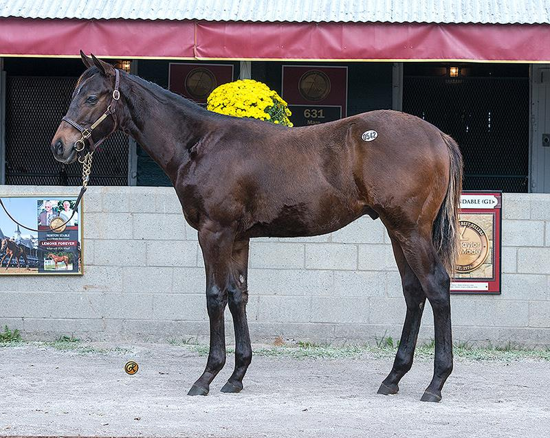 Paynter colt hammers for $250K at Keeneland title=