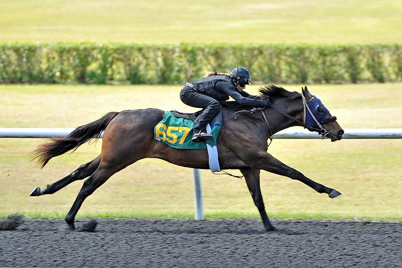 Paynter colt picked up for $250K Thursday at OBS April sale title=