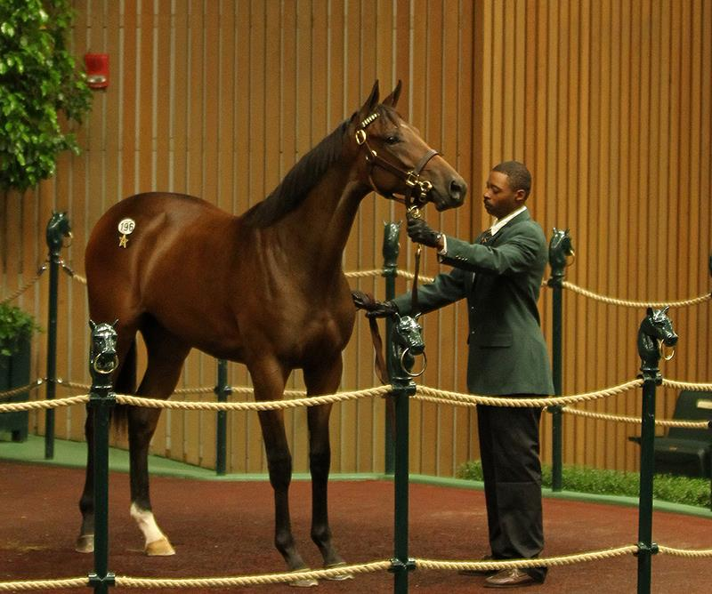 Pioneerof the Nile's $500,000 filly, hip No. 196, at the 2017 Keeneland September Yearling sale - photo by Z