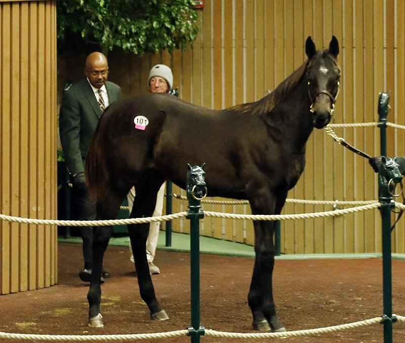 Pioneerof the Nile's $425,000 colt, hip No. 101, at the 2017 Keeneland November Sale - photo by Z