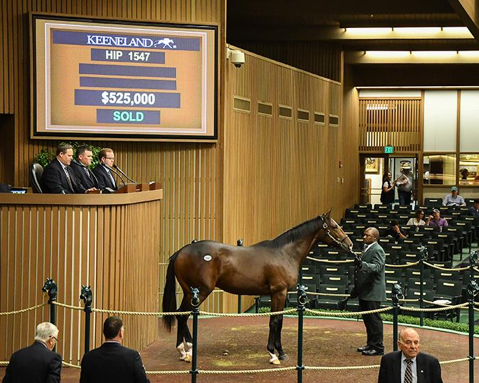 $525,000 Pioneerof the Nile colt tops Keeneland Saturday session title=