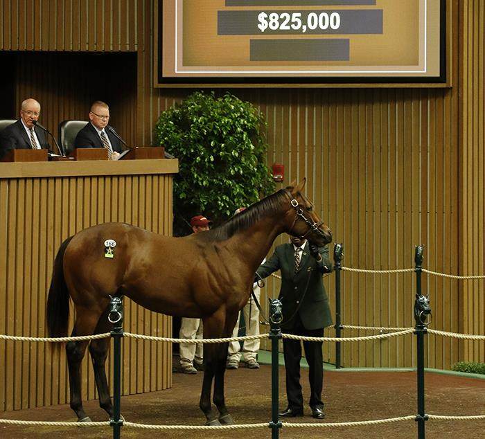 Pioneerof the Nile's $825,000 colt, hip No. 166, at the 2017 Keeneland September Yearling sale - photo by Z