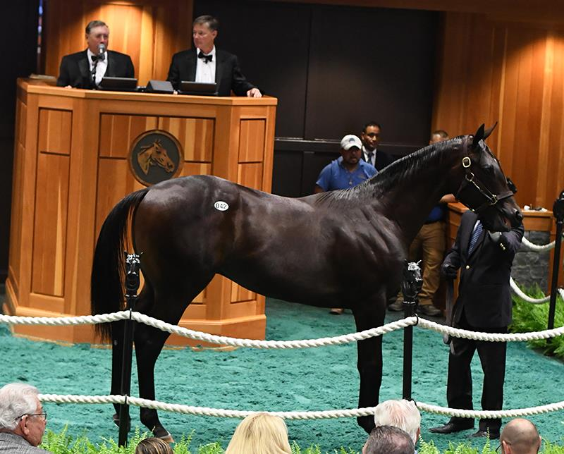 Stellar first day for Pioneerof the Nile at Fasig-Tipton Saratoga sale title=