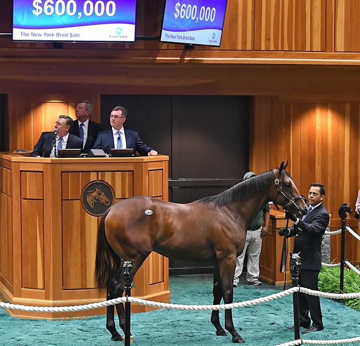 $600,000 Pioneerof the Nile colt sets record at Fasig-Tipton NY-bred Preferred Yearlings sale title=