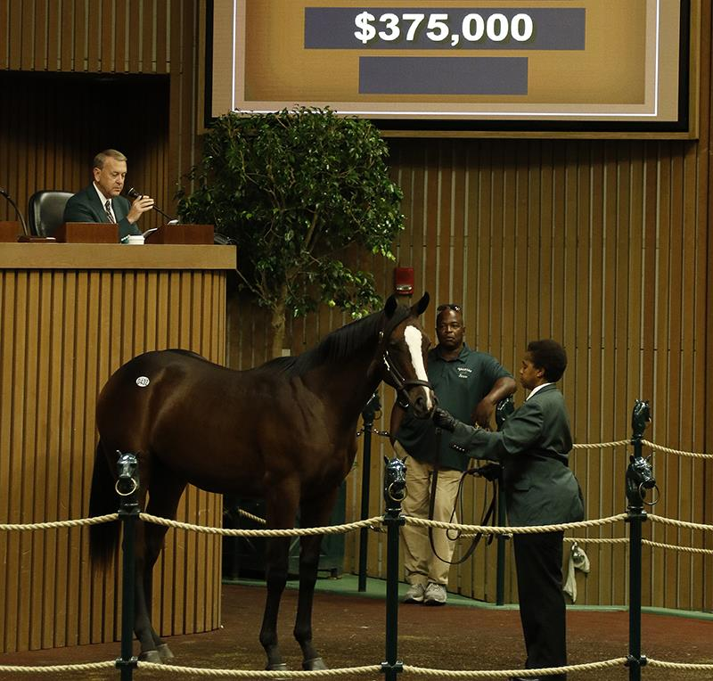 Keeneland September sale: Pioneerof the Nile average tops $275K title=