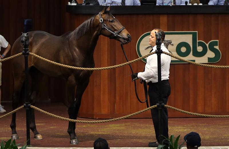 $1.2 million Pioneerof the Nile colt a star at OBS title=
