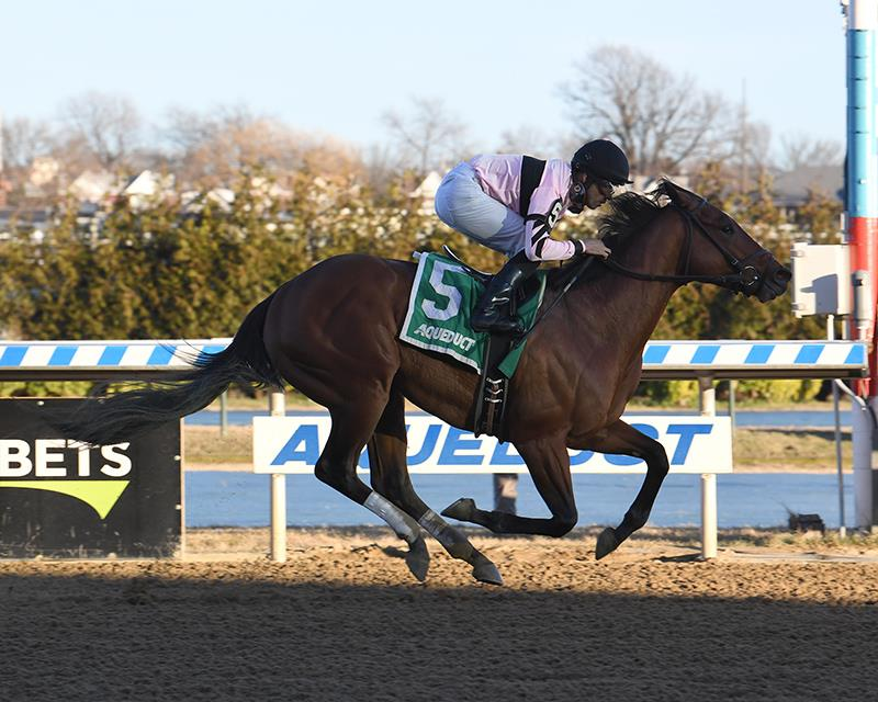 Fed Biz colt kicks off 2020 with Aqueduct stakes win title=