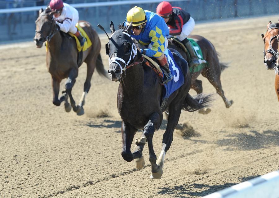 Shanghai Bobby takes the $100,000 Aljamin S. at Belmont