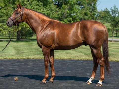 Sidney's Candy 2yo scores impressively on Laurel turf title=