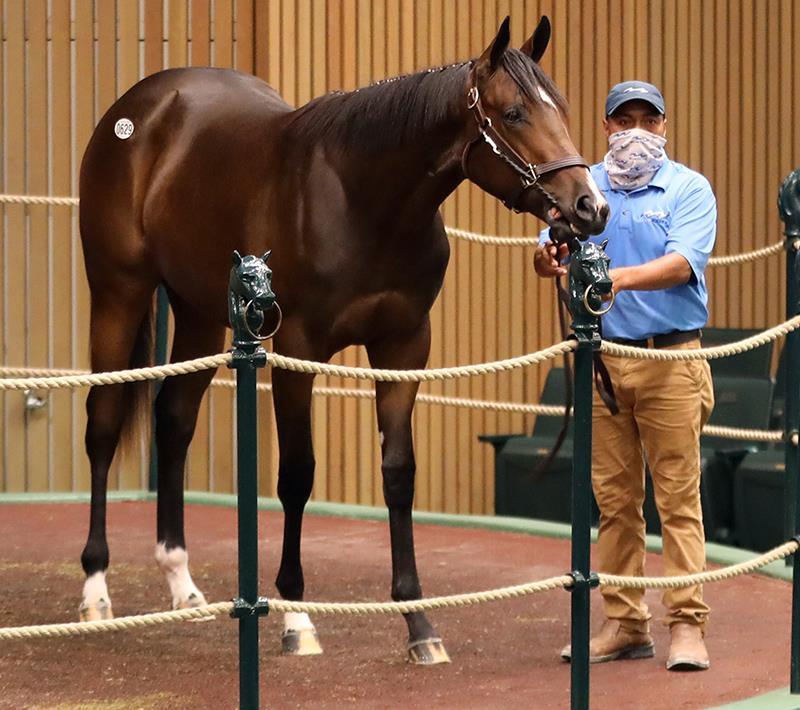 Speightster filly tabbed for $475,000 Wednesday at Keeneland title=